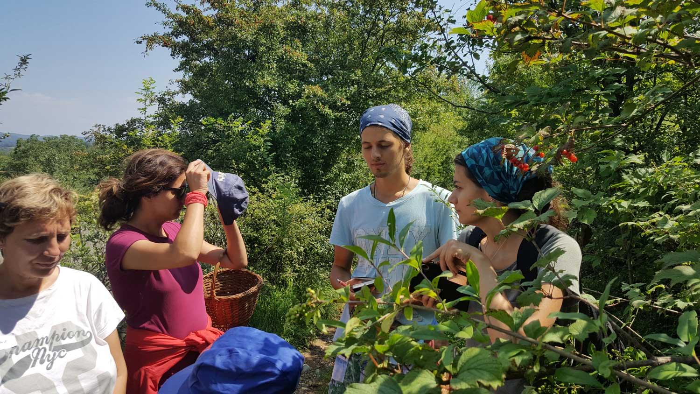 poza de la forumul national de cules din flora spontana