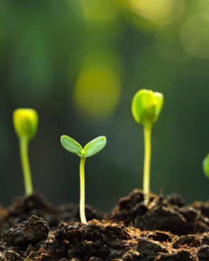 plante mici - rasaduri