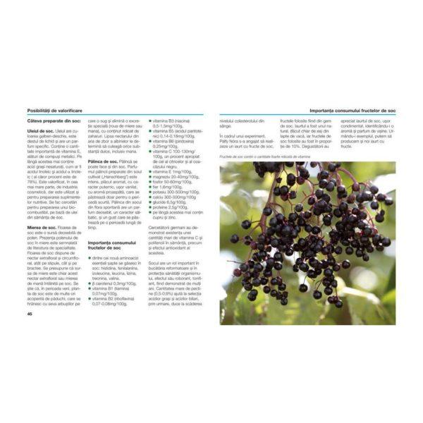 descriere și informații utile despre soc (Sambucus nigra) + fructe copate din cartea Socul: cultivare, utilizare în gastronomie şi în farmacia casei