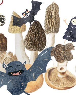 Workshop ciuperci si intelegerea ecosistemului de halloween