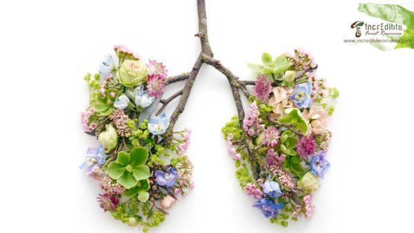 Curs aparatul respirator si plantele medicinale IncrEdible
