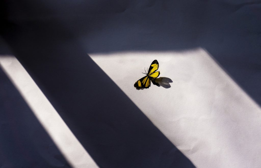 fluture în soare- studiul de însorire
