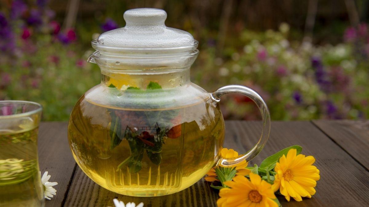 ceai de plante medicinale pentru femei cu galbenele (Calendula officinalis)