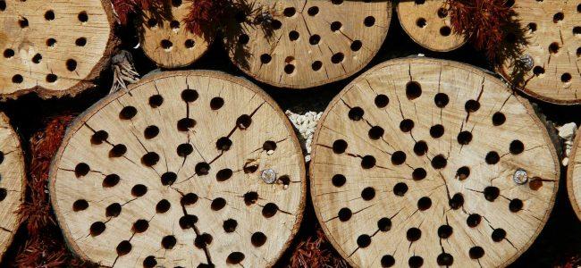 incredible-curs-permacultura-gradinarit-hotel-insecte-macro
