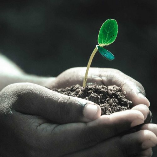 incredible-curs-permacultura-gradinarit-om-mana-munca-pamantului-planta-planteaza