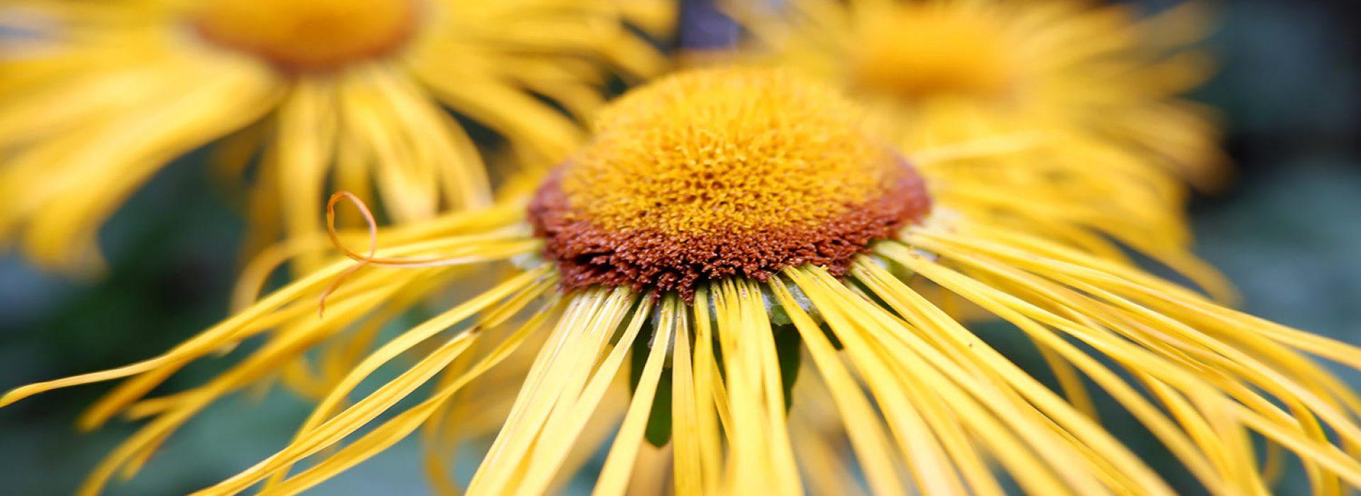 incredible-romania-curs-plante-medicinale