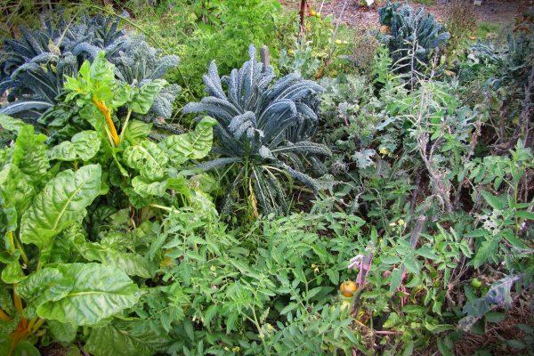 permacultura-curs-gradinarit-gradina-legume