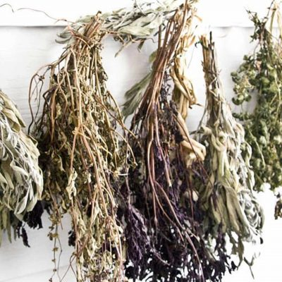 plante-medicinale-salbatice-uscate-ceaiuri